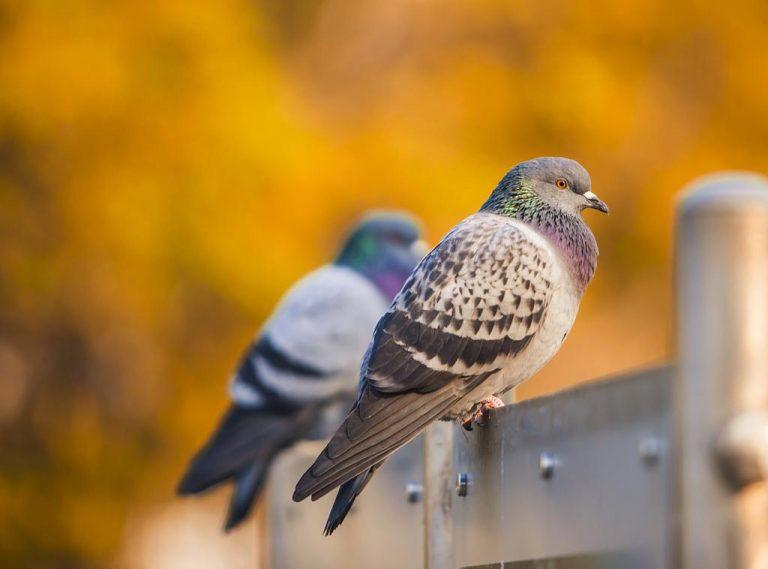 Po co nam nieproszeni goście na naszym balkonie?
